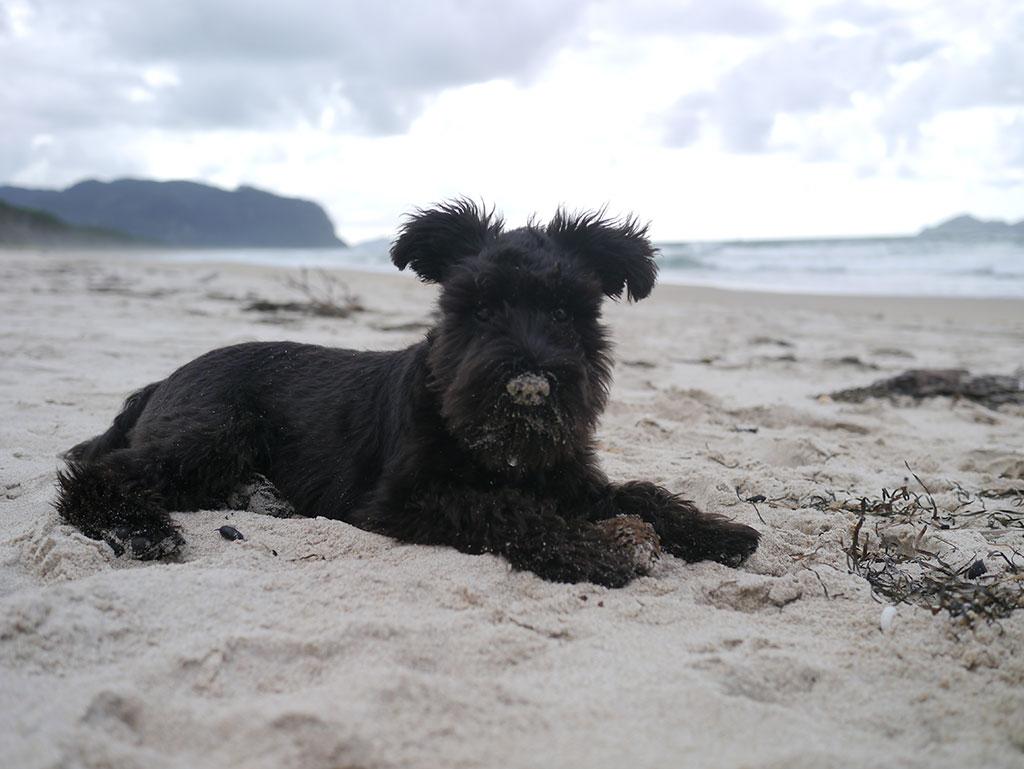 shadow at the beach